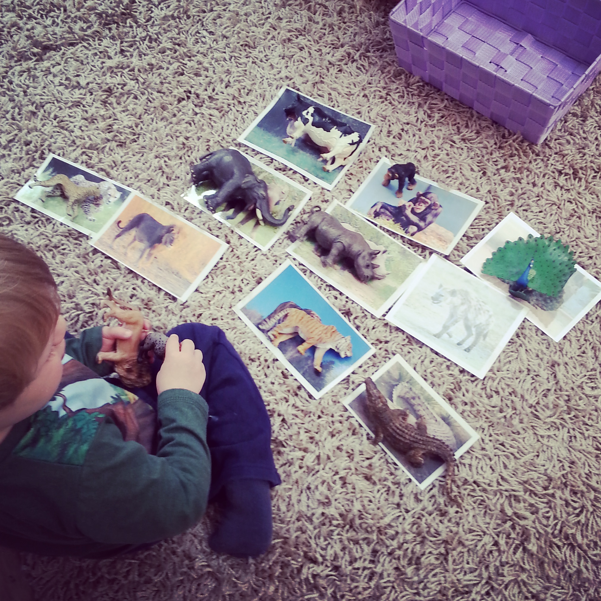 Matching language cards and animals